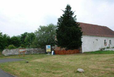 najstarsze drzewo w polsce
