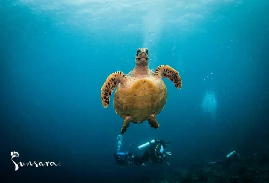malediwy-nurkowanie