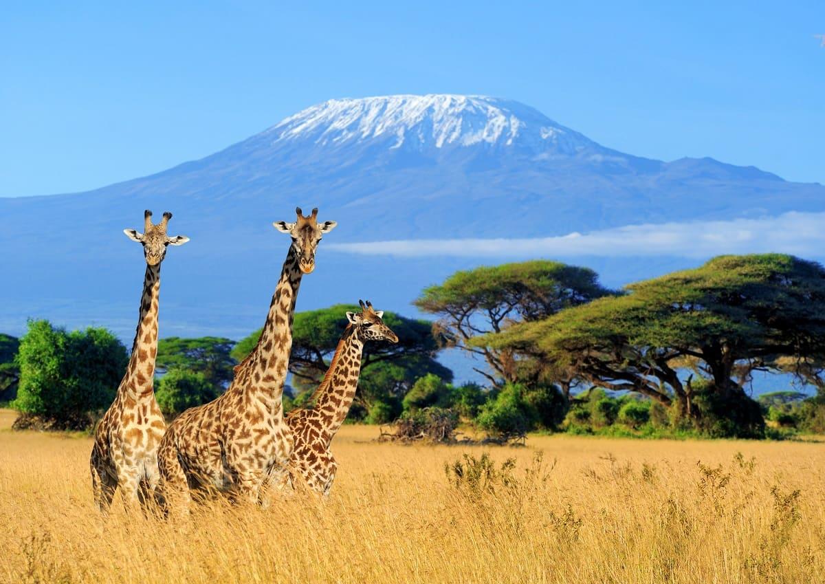 Kilimandżaro – królowa Afryki